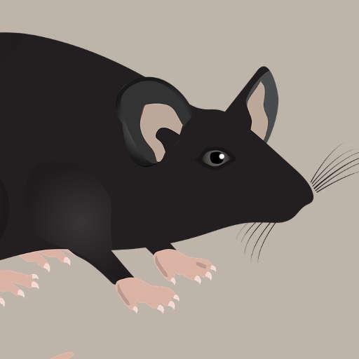 Répulsif anti souris et anti rats
