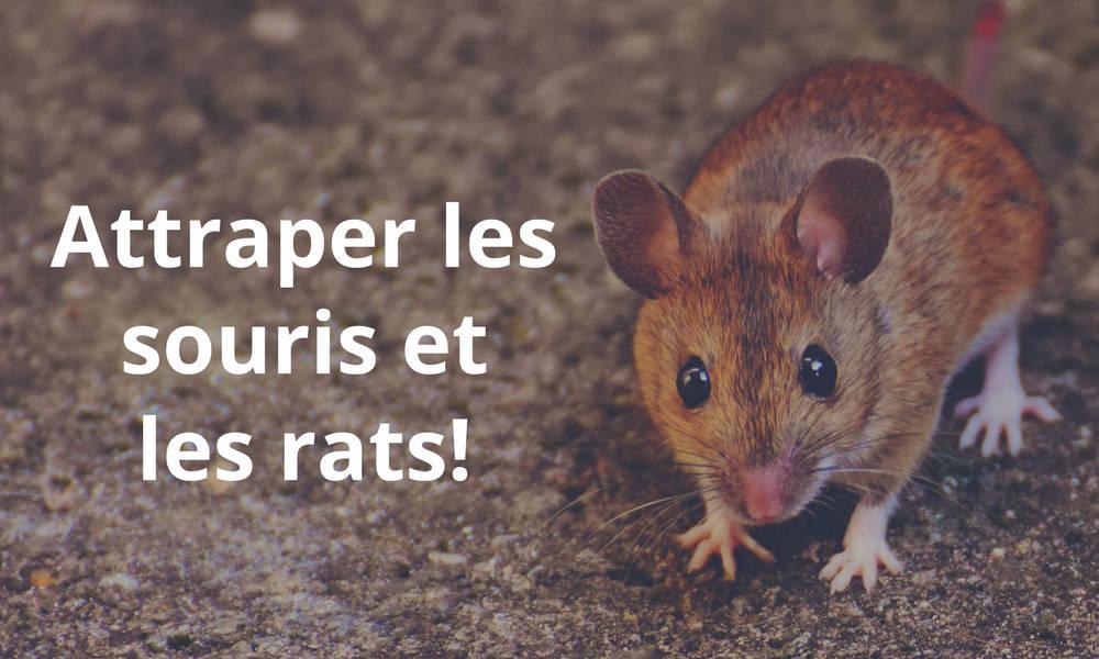 Piège pour attraper les souris et les rats
