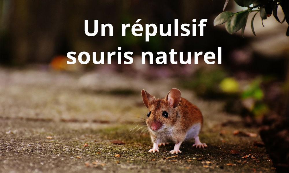 Répulsif souris naturel pour rats et souris