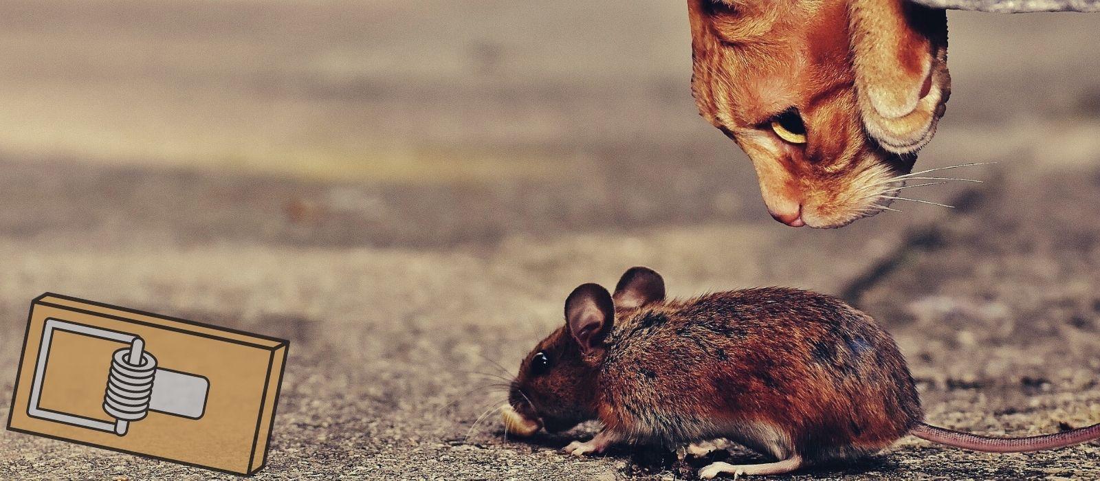Pièges et répulsifs pour rats et souris