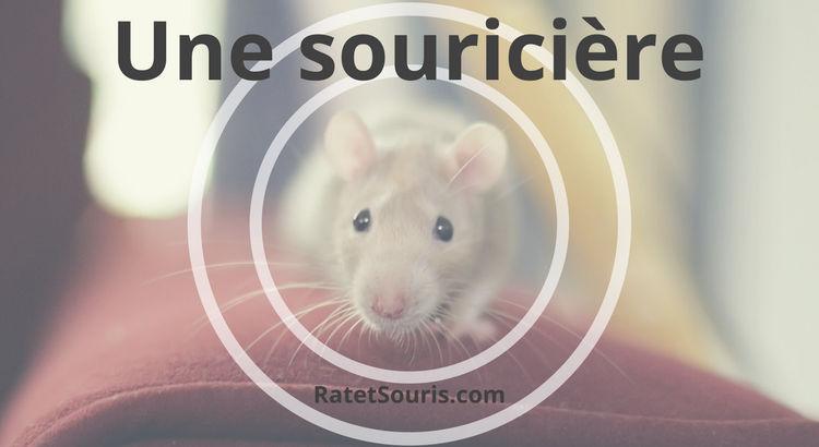 Capturer les souris vivantes avec une souricière